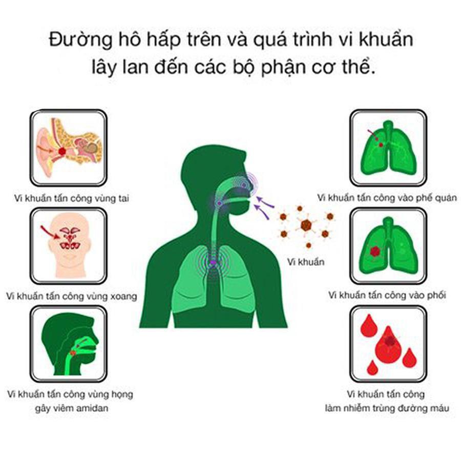 Vi khuẩn tấn công đường hô hấp